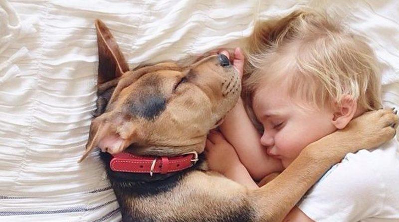 Vivere con cani e gatti aiuta i bambini a non prendere allergie