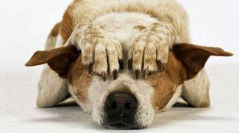 No ai botti: i consigli di Enpa per tranquillizzare cani e gatti