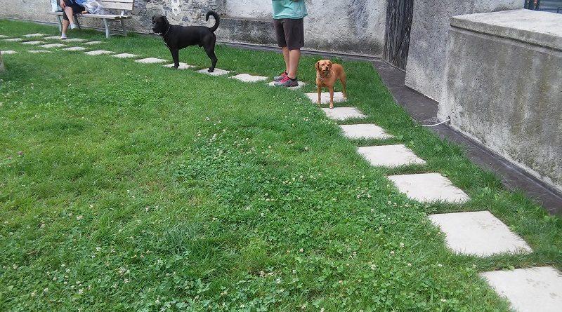 Bellano  area cani