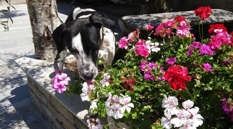 Astrodog 2019 le caratteristiche di Fido a seconda della data di nascita