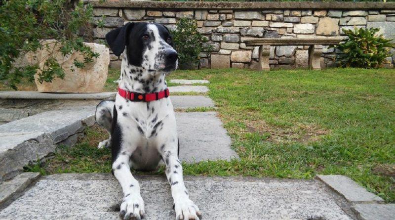 cane lago di Como
