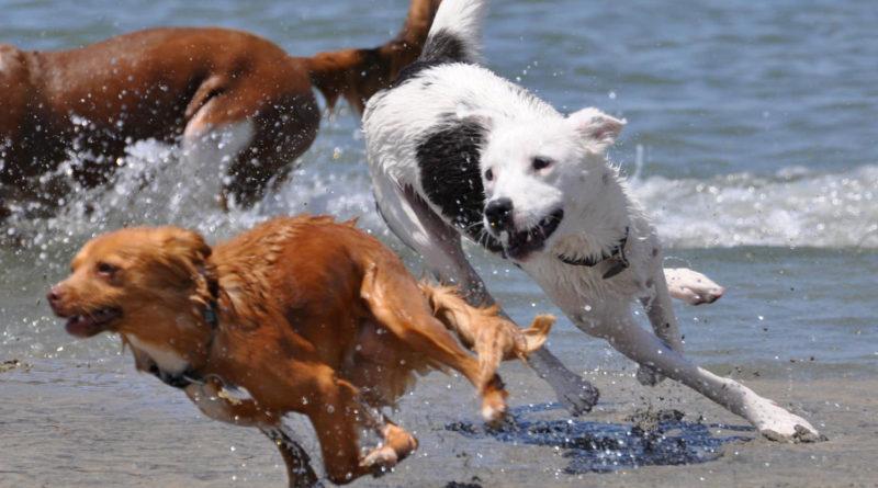 I consigli dell'Ats Brianza per proteggere cani e gatti dal caldo