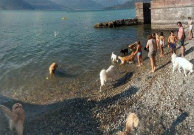 Alla Foppa di Dervio inaugurata la dog beach