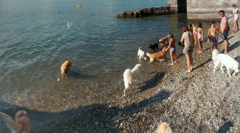 Dervio spiaggia cani la Foppa